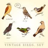 Set of birds Royalty Free Stock Image