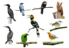 Set of birds on white background royalty free stock image