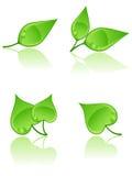 Set Blätter. Stockfotografie