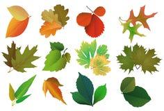 Set Blätter, Jahreszeiten Lizenzfreie Stockfotos