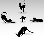 Set of black cats. In various poses Royalty Free Stock Photography