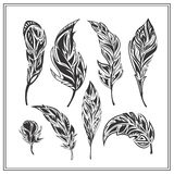 Set of black decorative feathers on a white Royalty Free Stock Images