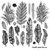 Set of black doodle exotic, banana leaves on a white background. Vector botanical illustration, elements for design. Royalty Free Stock Image