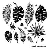 Set of black doodle exotic leaves on a white background. Vector botanical illustration, elements for design. Royalty Free Stock Photography
