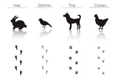 Set of Black Farm Animals and Birds Silhouettes: Hare, Sparrow,. Set of Animal and Bird Trails with Name.Vector Set of Black Farm Animals and Birds Silhouettes Royalty Free Stock Photo