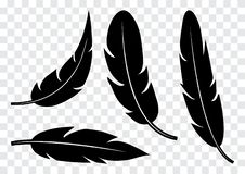 Set of black feather isolated. Vector illustration royalty free illustration