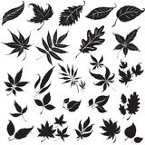 Set of black floral design elements Royalty Free Stock Photography
