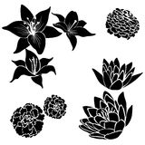 Set of black flower design elements Royalty Free Stock Images