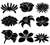 Set of black flowers Royalty Free Stock Photos