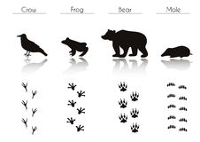 Set of Black Forest Animals and Birds Silhouettes: Crow, Frog, B. Set of Animal and Bird Trails with Name.Vector Set of Black Forest Animals and Birds Stock Photo