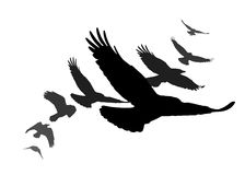 Set of black isolated silhouettes with crows Royalty Free Stock Photo