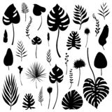 Set of black isolated silhouettes of tropical leaves, grasses and flowers of various kinds. Vector illustration. Set of black isolated silhouettes of tropical stock illustration