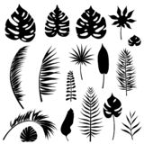 Set of black isolated silhouettes of tropical leaves and plants of different species. Vector illustration. Set of black isolated silhouettes of tropical leaves stock illustration