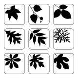 Set of black leaves. Set of leaves in black and white stock illustration