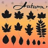 Set of 15 black leaves vector illustration