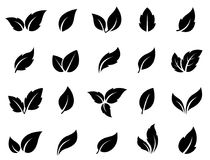 Set of green leaves. Set of black leaves icons on white background Royalty Free Stock Image