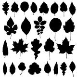 Set of black leaves silhouette Stock Photography