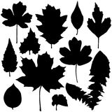 Set of black leaves silhouette. Vector set of black leaves silhouette vector illustration