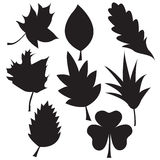 Set of black leaves silhouettes. On white background Stock Photography