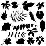 Set of black leaves silhouettes. On white background Royalty Free Stock Photography