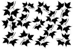 Set black maple leaves isolated on white background. Set black maple leaves isolated white background vector illustration