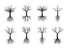 Set black naked Trees with Roots. Vector Illustration Stock Images