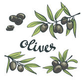 Set of black olives with leaves. Royalty Free Stock Image