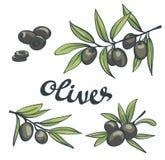 Set of black olives with leaves. Vector illustration stock illustration