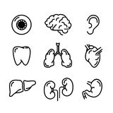 Set black outline icons of humans organs on white stock illustration