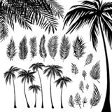 Set of black Palm trees silhouette and branches on a white background. Vector illustration, design element for. Congratulation cards, print, banners stock illustration