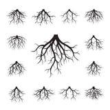 Set of Black Roots. Vector Illustration. vector illustration