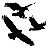 Set of black silhouette three eagles Royalty Free Stock Photography