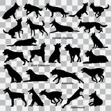 A set of black silhouettes of dogs on a transparent background. Set of vector illustrations. A set of black silhouettes of dogs - German Shepherd, Giant stock illustration