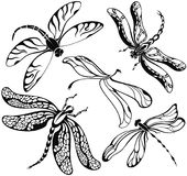 Set of decorative silhouettes dragonflies. Set of black silhouettes dragonflies on white background.Vector illustration stock illustration