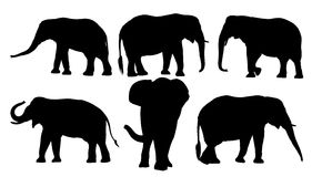 Set of black silhouettes of elephants Stock Photo
