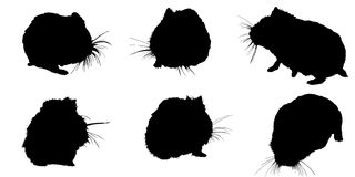 The set of black silhouettes hamster. The set of black silhouettes of a pet hamster on a white background vector illustration
