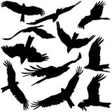 Set black silhouettes of prey eagles on white Royalty Free Stock Images