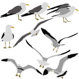 Set black silhouettes of seagulls on white Stock Photography