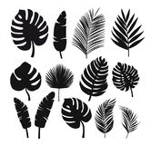 Set of black silhouettes of tropical leaves palms, trees. Vector Royalty Free Stock Image
