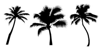 Realistic Palm Tree Silhouettes Stock Photo