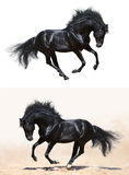 Set - black stallion in motion Stock Image