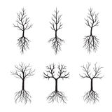 Set Black Trees and Roots. Vector Illustration. Black Naked Trees and Roots. Vector Illustration Royalty Free Stock Photos