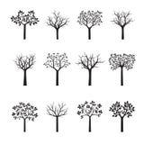 Set of black Trees. Vector Illustration. Set of black naked Trees. Vector Illustration Royalty Free Stock Images