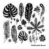 Set of black trendy doodle exotic leaves on a white background. Vector botanical illustration, elements for design. Royalty Free Stock Photos