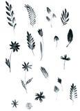 Set of black watercolor floral elements Stock Image