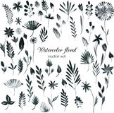 Set of black watercolor floral elements Stock Photography