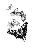 Set  black white butterflies of a tattoo Royalty Free Stock Image