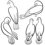 Set of black and white contours of four pigeons. Stock Photos