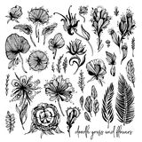 Set of black and white exotic flowers, doodle elements. Vector illustration, Great design element for congratulation Stock Photography