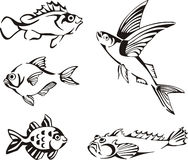 Set of black and white fish. Black and white fishes. Set of black and white vector illustrations Stock Photo